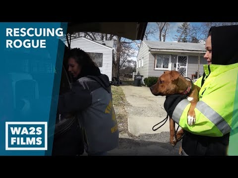 2 Girls Cry When They Surrender Their Dog named Sky Ep 28 Rescuing Rogue