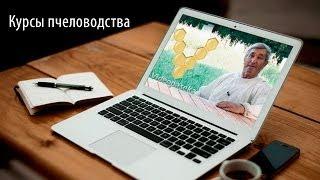 Курсы пчеловодства онлайн