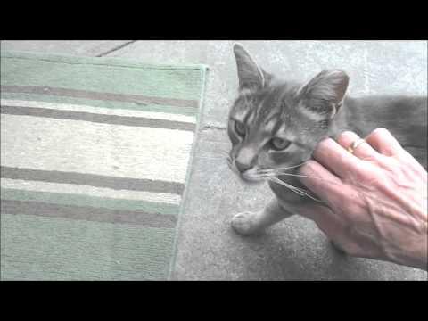 petting feral cat