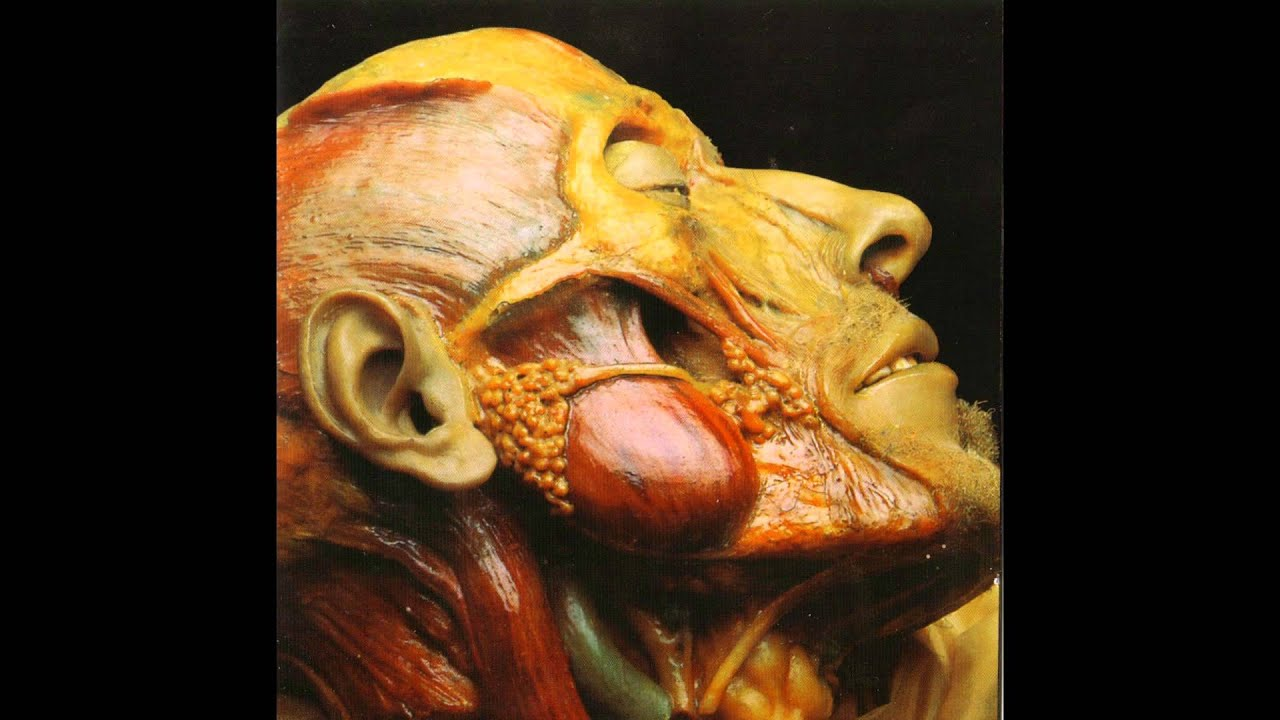 Lymphatic Phlegm Show Off Cadavers The Anatomy Of Self Display