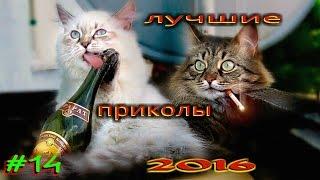 ЛУЧШИЕ ПРИКОЛЫ 2016!!!Самое смешное видео(, 2016-07-24T11:45:22.000Z)