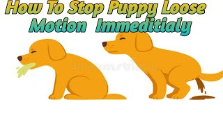 How To Stop Puppy Loose Motion Fast At Home