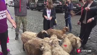 """პარლამენტთან აქციაზე მოძრაობა """"სირცხვილიას"""" წარმომადგენლებმა ცხვრები მიიყვანეს"""
