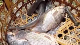 fishing in viet nam-snakehead fishing in vietnam