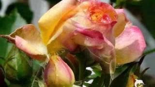 Nana Mouskouri - 7 schwarze Rosen träumen