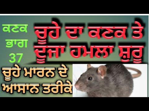 Rat Management in