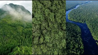 Restoring the world's forests with the Priceless Planet Coalition