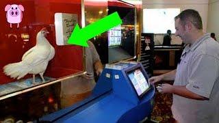 11 Strange Casino Games That Actually Exist