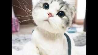 Смешное видео с котами, приколы с котами  - САМЫЕ МИЛЫЕ КОТЯТА & funny kittens