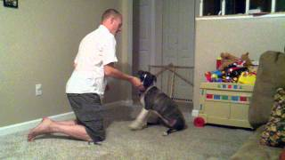 Training Your Dog To Shake And Sit Pretty