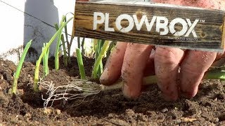 Planting Onions & Plowbox Unboxing & Review