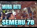 Murai Batu Semru  Mb Pajero Kuasai Arena  Mp3 - Mp4 Download