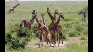 Afryka – Tanzania – Safari – 2015
