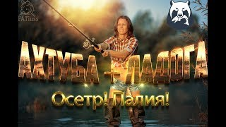 Російська рибалка 4 | Стрім #48 | Осетер на Ахтубі | Палія на Ладозькому озері ! СУПЕР ЧАТ!