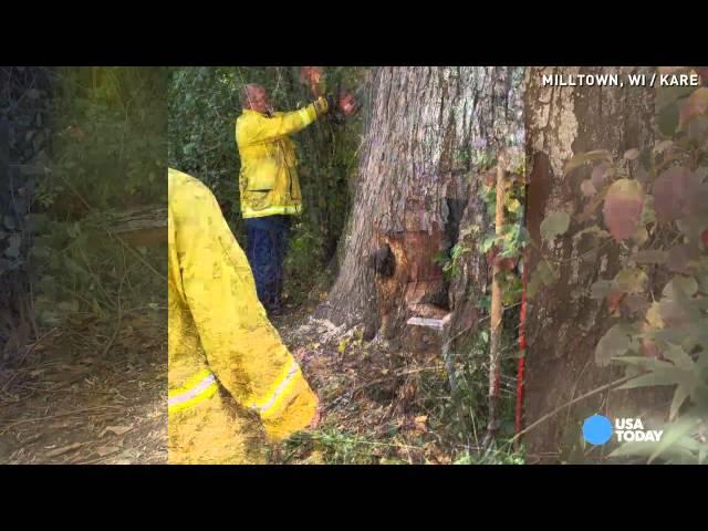 Djevojka je čula plač iz šume, a kada je prišla jednom starom stablu nije mogla vjerovati pa je sve to snimila!