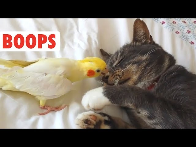 Dog and Cat Boops Compilation | BOOP!