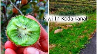 Kiwi In Kodaikanal? - Kodaikanal Vlog Part 2 - Nisa Homey