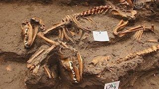 Древнюю могилу собак нашли в Мехико (новости)