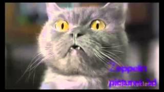 правильная реклама мегафона с котом