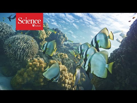 Watch—and hear—the impact human noises have on marine life