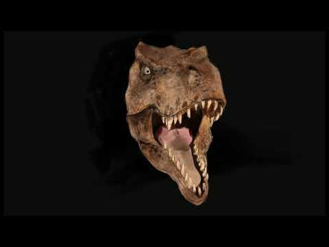 [그리다] 공룡 그림 그리기 _티라노사우루스 [Grida] Tyrannosaurus painting