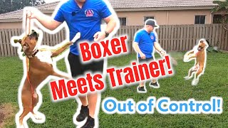 Out of Control BOXER meets Dog Trainer!