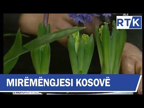 Mirëmëngjesi Kosovë - Kronikë - Këshilla për kujdesin e luleve  16.12.2017