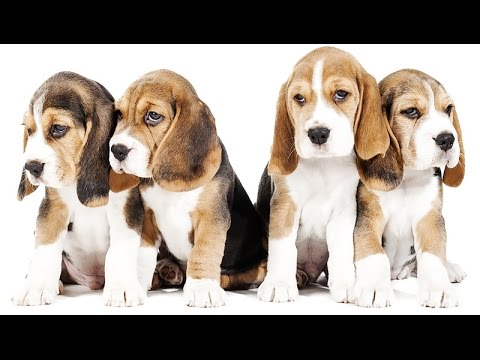 Cani di taglia piccola da appartamento youtube