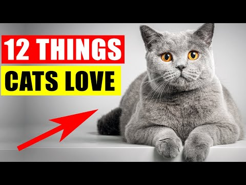 12 Things Cats Love the Most