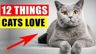 Things Cats Love