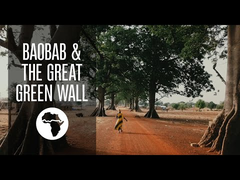 Baobab & The Great Green Wall of Africa – Aduna