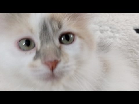 Kitten Close Up 2017-05-10