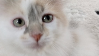 Kitten Close Up 2017-05-10 thumbnail