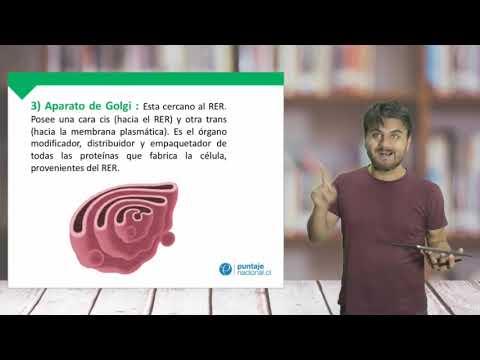 Biología - Célula Eucarionte Y Procarionte - Clase N°4 2019