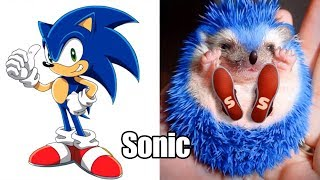 Sonic Boom Characters In Real Life