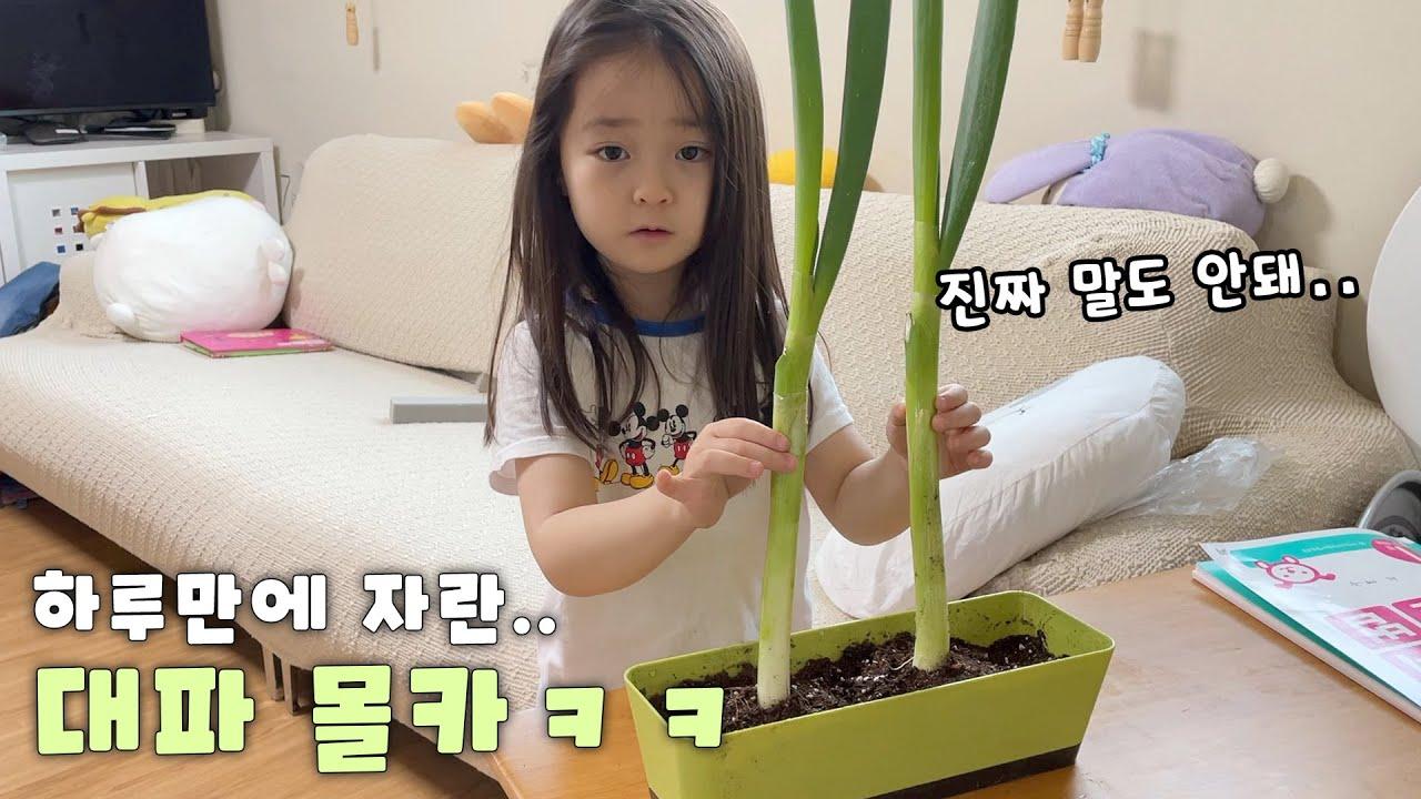 마법의 씨앗을 사왔다고 했을 때 8살 예콩이는 과연 믿을까요?