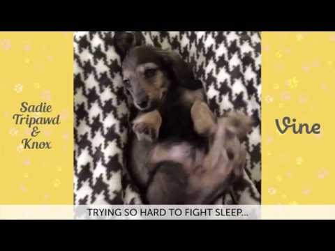 ULTIMATE Sadie Tripawd and Knox Vine Compilation | FUNNY CUTE Vine Videos 2015