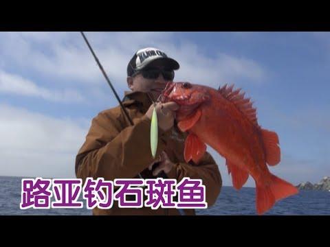 如何用路亚钓石斑鱼? 钓鱼技巧教学Fishing Tutorial:Grouper Fishing
