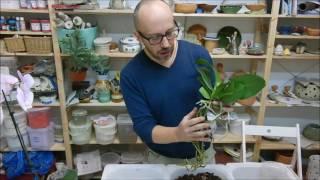 Presađivanje Orhideja
