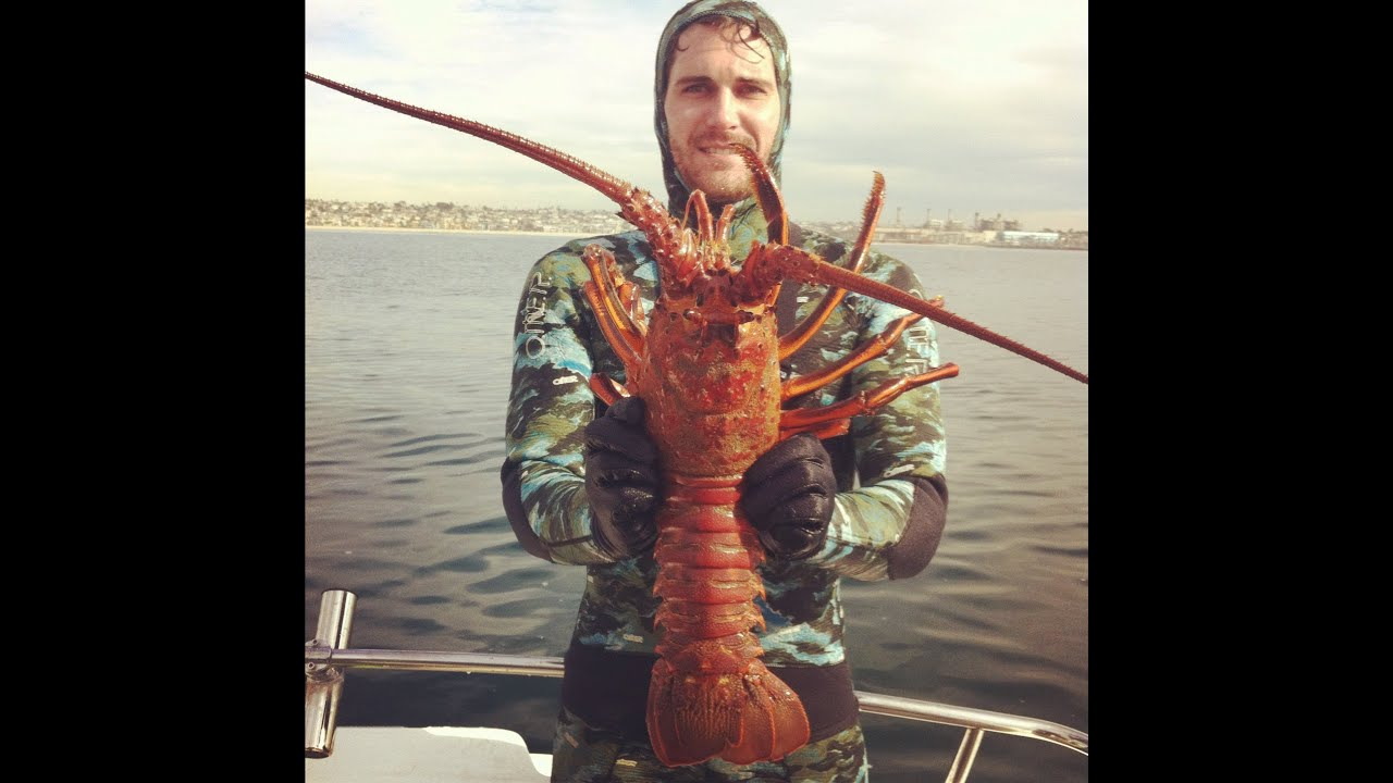 Scuba diving for big lobster in california for Lobster fishing california