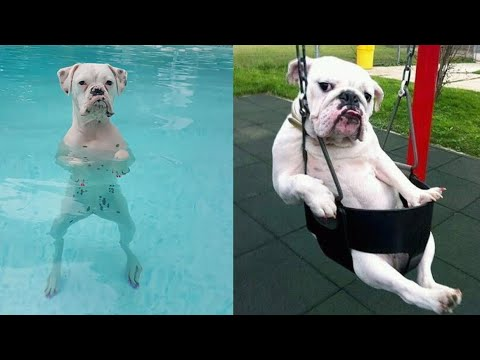 Funny And Cute Dogs Videos Compilation || Awesome Funny Pet Animals Videos