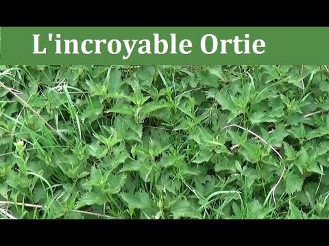 l'incroyable-ortie