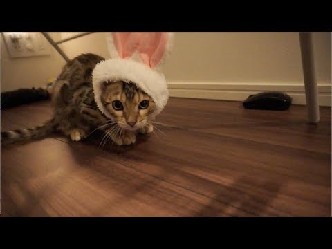 子猫たちに帽子被せたら天使になった