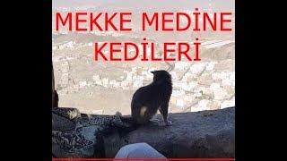 Mecca and Medina Cats-Mekke Medine Kedileri