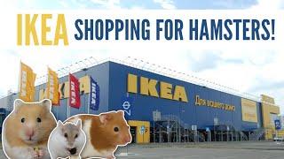 Vidéo Hamster Wamiz