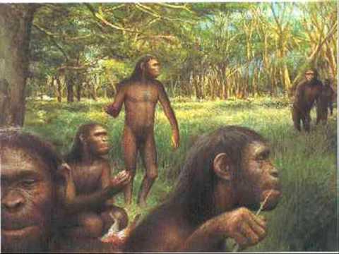 la evolución humana.wmv