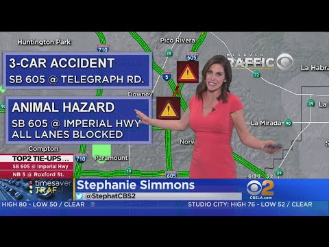 Chickens Reported On 605 Freeway At Imperial Highway