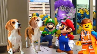 ⭐Best Of The Minions , Mario And Lego In Real Life Compilation ⭐ Amazing Surprise