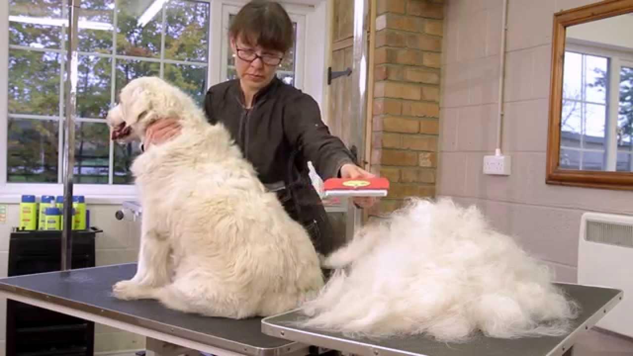 FURminator deShedding verktøy til hund - YouTube