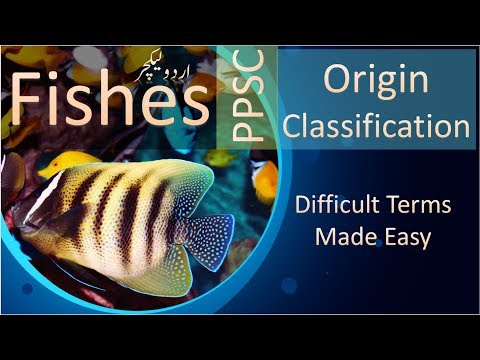 Fishes | Origin | Classification | Terms Made Easy